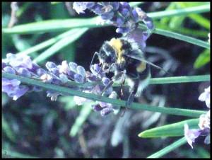 Non è allergico al polline...