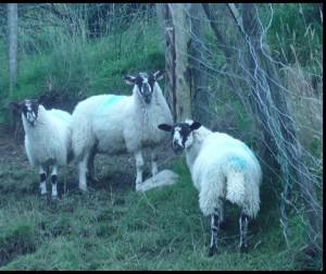 Un dodicimilionesimo del patrimonio ovino