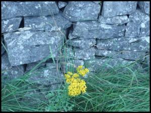 Yorkshire Dales. Base di muro