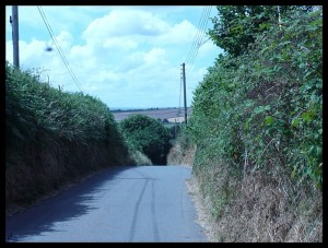 Strada con siepi