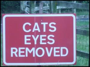 Hanno cavato gli occhi al gatto?